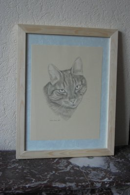 un chat - Les portraits d